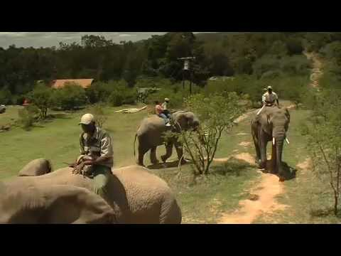 Addo Elephant Back Safaris Eastern Cape South Africa