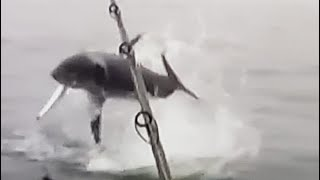 MASSIVE MAKO Airs out on a big Kingfish!!! Unbelievable Deep Sea Fishing!!!