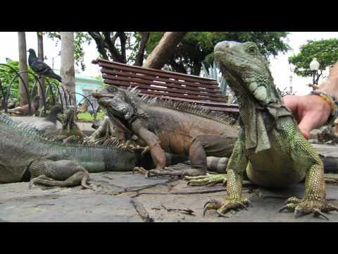 Iguana Park – Guayaquil, Ecuador