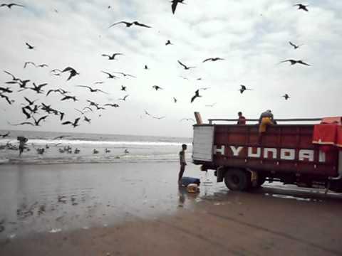 Ecuador: Puerto Lopez – International Living