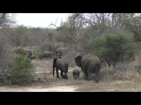 South Africa November 2009 highlights