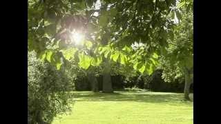 浸入(儿童的冥想) - Soaking in Sunshine  - Kids Meditation (Chinese)