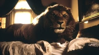 "Jumanji- Tom Woodruff Jr. As ""The Lion""- Animatronic Lion, Behind the Scenes"