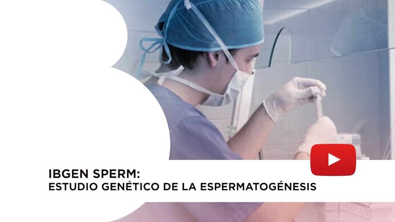 IBgen Sperm: estudio genético de la espermatogénesis