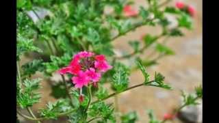 유월의 꽃