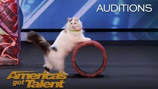 The Savitsky Cats: Super Trained Cats Perform Exciting Routine - America's Got Talent 2018 width=
