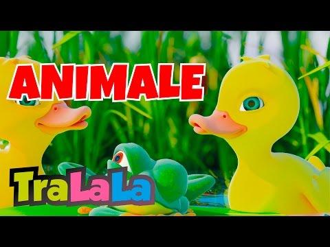 Cinci rățuște - Cântece cu animale 60 MIN