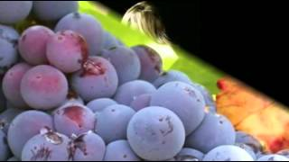 Když dozrálo víno - Petr Spálený