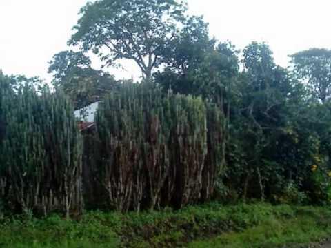 EL NORTE DE NICARAGUA