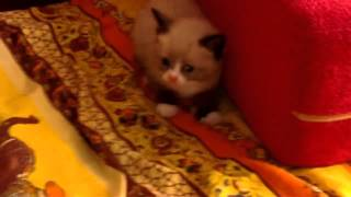 Коте мило испугался