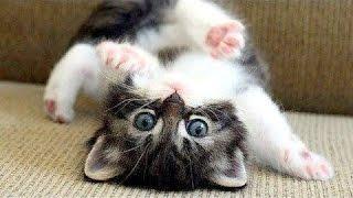 Kočky Jsou Prostě Nejlepší - Vtipné Kočka Kompilace