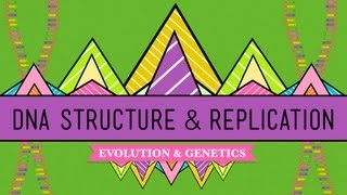 DNA Structure and Replication: Crash Course Biology #10