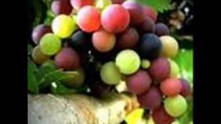 Bate na Avó XÉ The Grapes