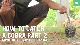 How to Catch a Cobra Part 2: Communication with the Snake