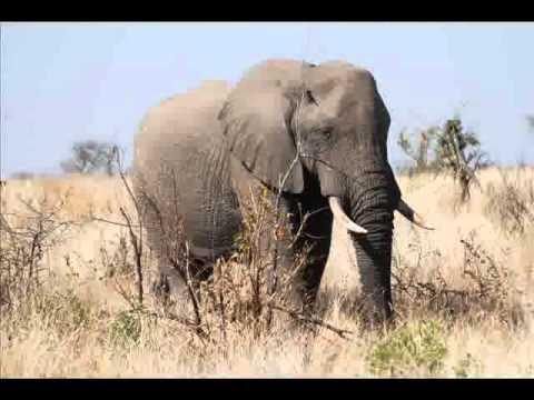 ELEPHANTS.wmv
