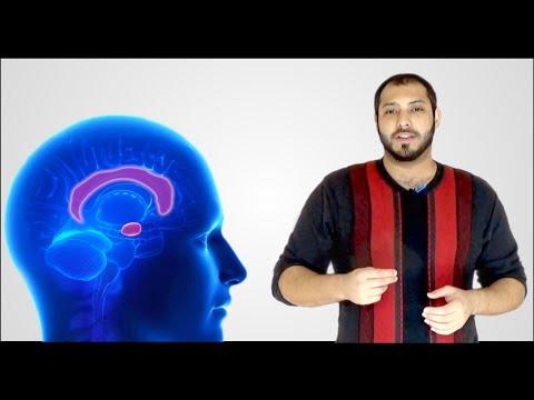 لية الإنسان بيكون متفائل؟   why humans are optimists? #neuroscience