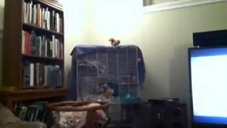 Squirrel doing Rattlesnake sound..Volume Up.