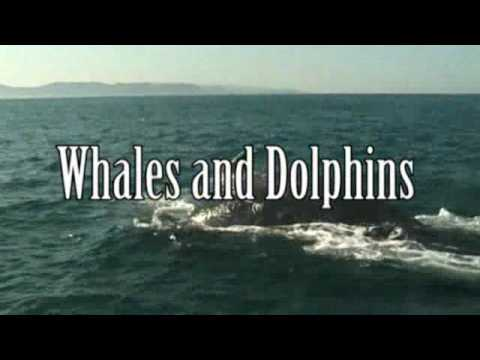 Dolphin & Whale Watching – KwaZulu Natal, South Africa