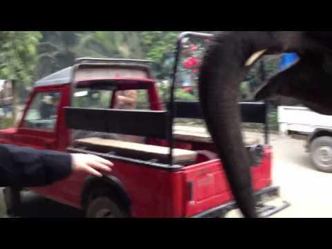 The elephant wants my camera!