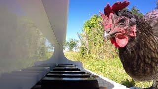 GoPro Awards: Chicken Sonata