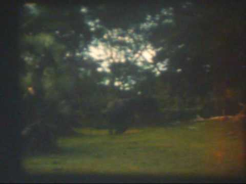 16mm Amateur Film, Africa, Safari, Emu Riding, Watercrossing, Animals, Waterfalls