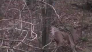 Pennsylvania Archery Season 2009 Bow Hunt 11 Point  November 11th