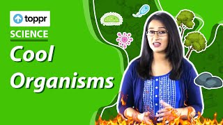 Class 6 Science: Identify living and nonliving things| Cool Organisms (CBSE, NCERT)
