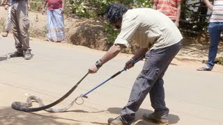 Watch a Man Snatch an Angry Cobra With His Bare Hands