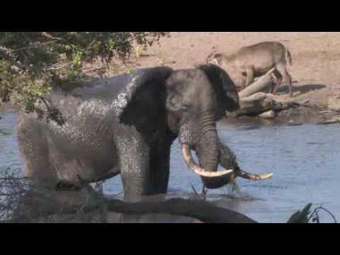 Thembe Elephant Reserve – KwaZulu Natal, South Africa