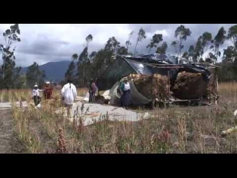 Agrobiodiversità culture e sviluppo locale –  Ecuador