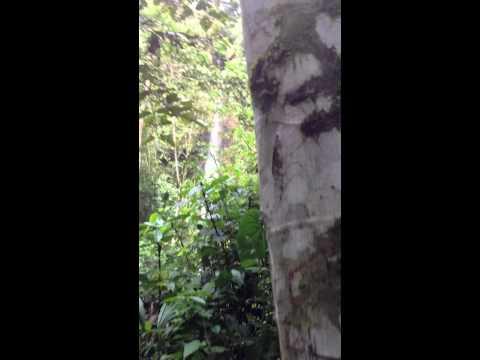 Caterpillar Train up tree in jungle