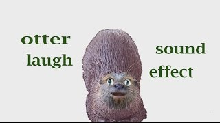 How A Funny Otter Laugh - Sound Effect - Animation