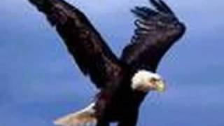 The Eagle and the Hawk plus Lyrics