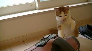 【猫記録279】実況!新春レイコップ戦!開幕!-The real condition Fight of the vacuum cleaner