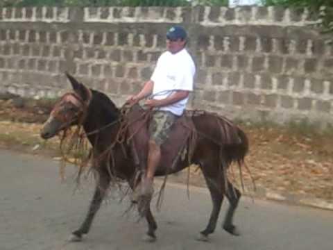 Tommy en caballo 2