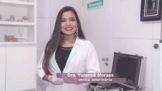 Dermatofitose fungos nos pelos e na pele dos animais - Bicho Fashion Hospital Veterinário 24h BANDTV
