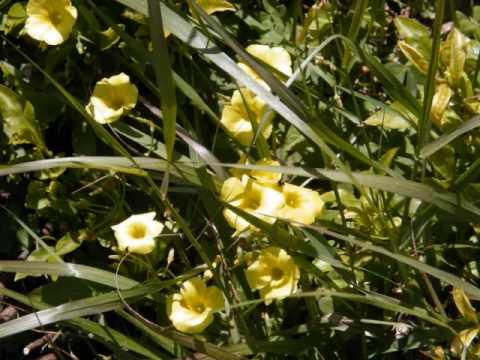 Flora Part 3
