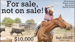 I got a horse for sale.. For sale, not on sale!