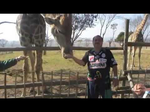 nuestro viaje por sudafrica 2010