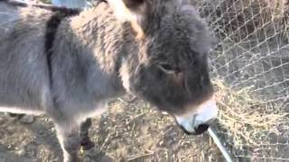 Gender Therapist Vlog #5: Backyard Adventures, aka Meet My Donkeys