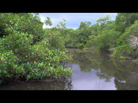 Green Pathways Tours Nicaragua : Tour In Isla Juan Venado Reserve