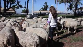 Mundo animal - Como é cuidar de ovelhas? - Entrevista com Ovinocultor Josuel da Unimar