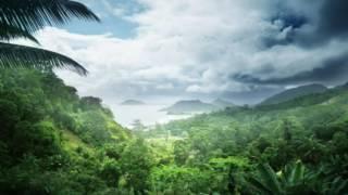 Rainforest Sound effect
