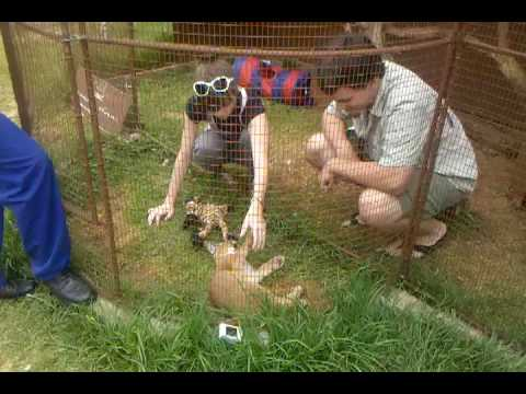 Playing With Caracal