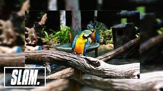 Bob Marley - Three Little Birds (Ricky Mears Remix)   SLAM Music