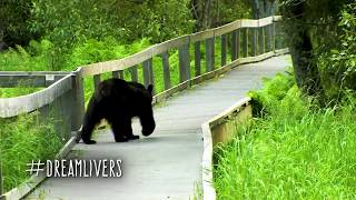 BEAR Confronts Guy - Completely Oblivious Man Almost walks into Black Bear