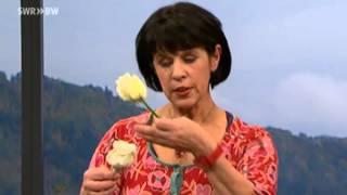 Schöne Deko mit gewachsten Rosen | Kaffee oder Tee?