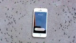 RUSSIAN HARDBASS make ants dance around Iphone