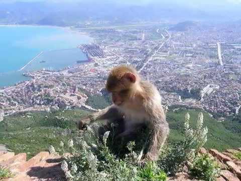 Beautiful Algeria  –  krásné Alžírsko