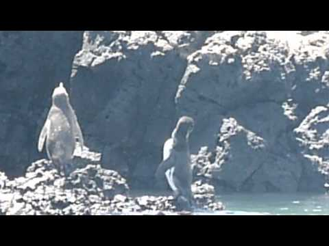 Ecuador   Galapagos   Isabela Isalnd part 13